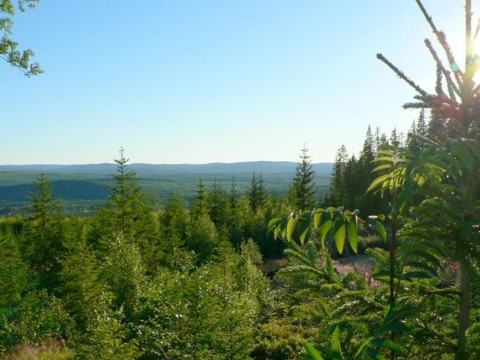 """APIA: 6.537.930 euro pentru Submăsura 8.1 """"Împăduriri și crearea de suprafețe împădurite"""", din cadrul PNDR 2014-2020. Stiri agricole"""