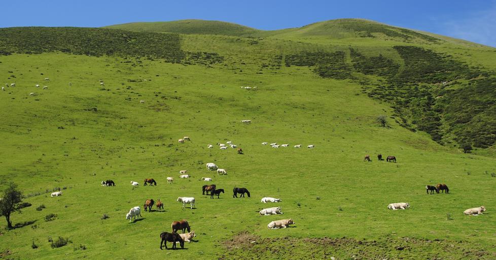 Controale în ferme pentru ajutoarele naționale tranzitorii și sprijinul cuplat în sectorul zootehnic. Crotalia cu microcip este obligatorie. Stiri agricole