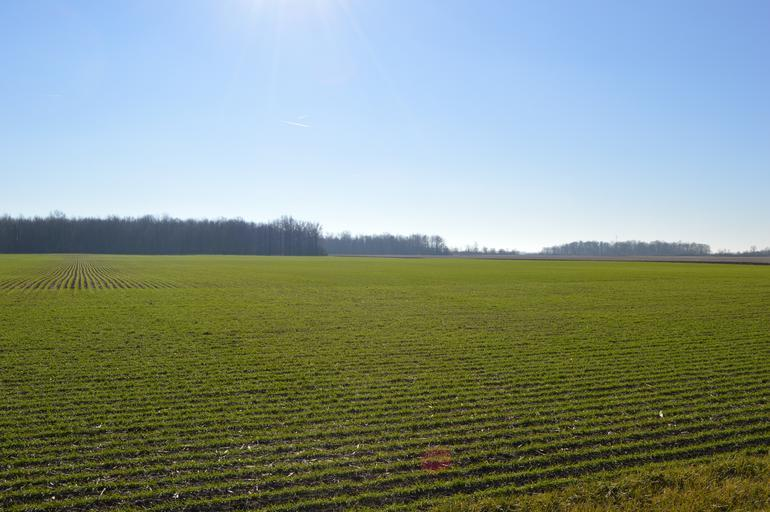 Prognoza agrometeorological 07 – 13 Ianuarie 2020, stiri agricole