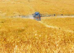 Noi reglementări fitosanitare pentru produse vegetale; Ordinul privind aprobarea listei utilizărilor minore în România; stiri agricole
