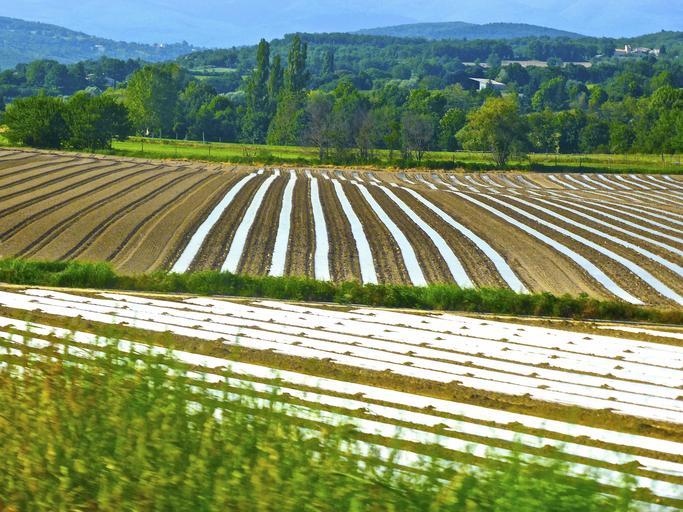 Impactul noului PAC asupra agriculturii ecologice, stiri din agricultura