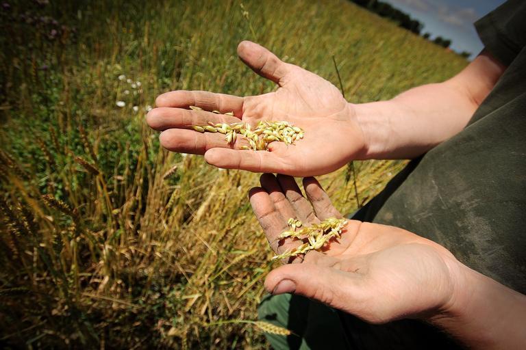 Avem nevoie de fermieri! Nu lăsați guvernele să-și bata joc de agricultură! Statul va decide obligatoriu cu fermierii măsurile pe care vor să le aplice!