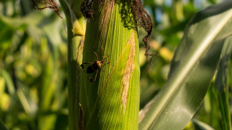 """Biocontrolul si problema pesticidelor. Franța intenționează să lucreze de două ori mai mult la dezvoltarea așa-numitelor metode de """"biocontrol"""", stiri agricole"""