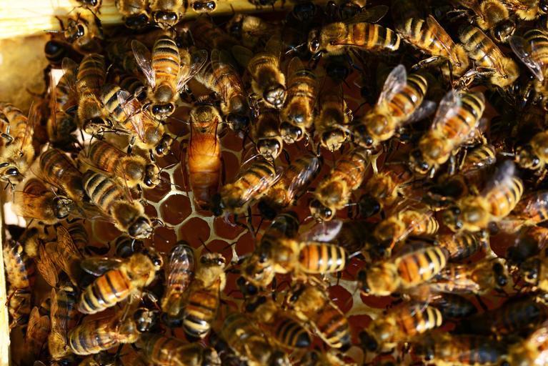 Situație alarmantă în apicultura europeană; Producția europeană satisface numai 64% din consum. Diferența este acoperită cu miere din import; stri agricole