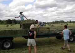 100 de milioane euro pentru angajarea tinerilor in agricultură; Angajatorii vor putea primi sprijin public nerambursabil; stiri agricole