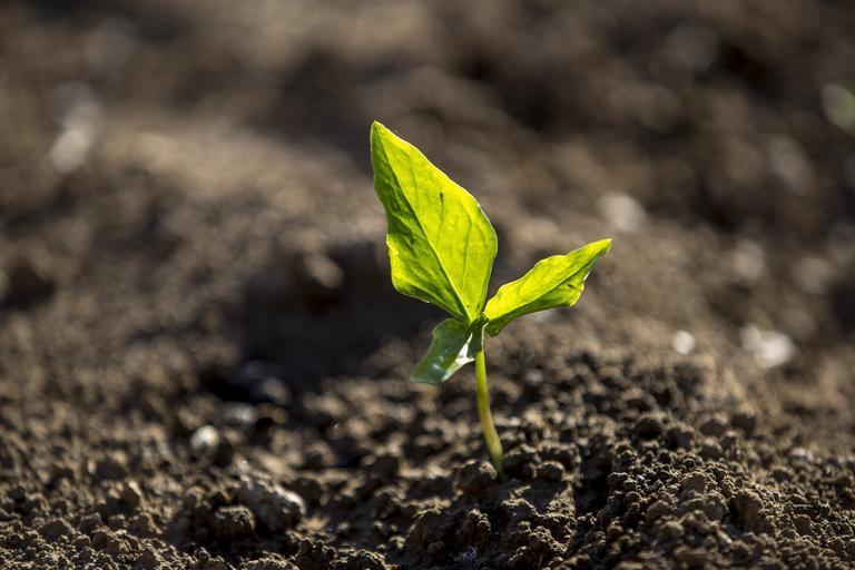 Recomandări pentru fermierii din sectorul vegetal; Ministerul Agriculturii și Dezvoltării Rurale vine în sprijinul fermierilor cu următoarele RECOMANDĂRI, stiri agricole