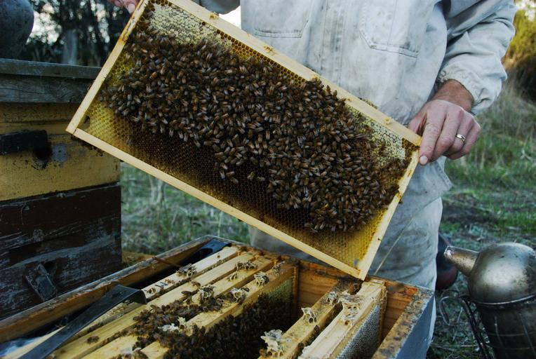 Ajutorul de minimis de 25 de lei/familia de albine aprobat! Termenul final de depunere a cererilor şi documentelor însoţitoare 15 septembrie 2020