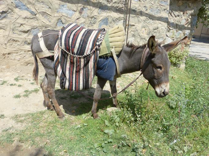 "Noi cu porcii, grecii cu ""magarii-taxi""; Activistii fac apel la guvernul elen sa interzica ""magarii-taxi"", calul este un animal de companie, stiri agricole, subventii apia"