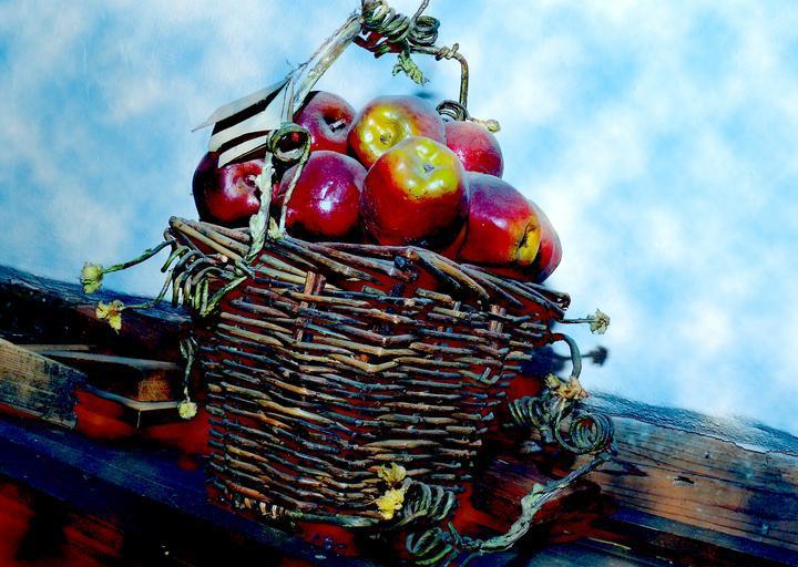 18,5 milioane de euro pentru distribuţia de fructe, legume si lapte in şcoli;acestui program i se alocă o sumă de 250 de milioane euro; stiri agricole