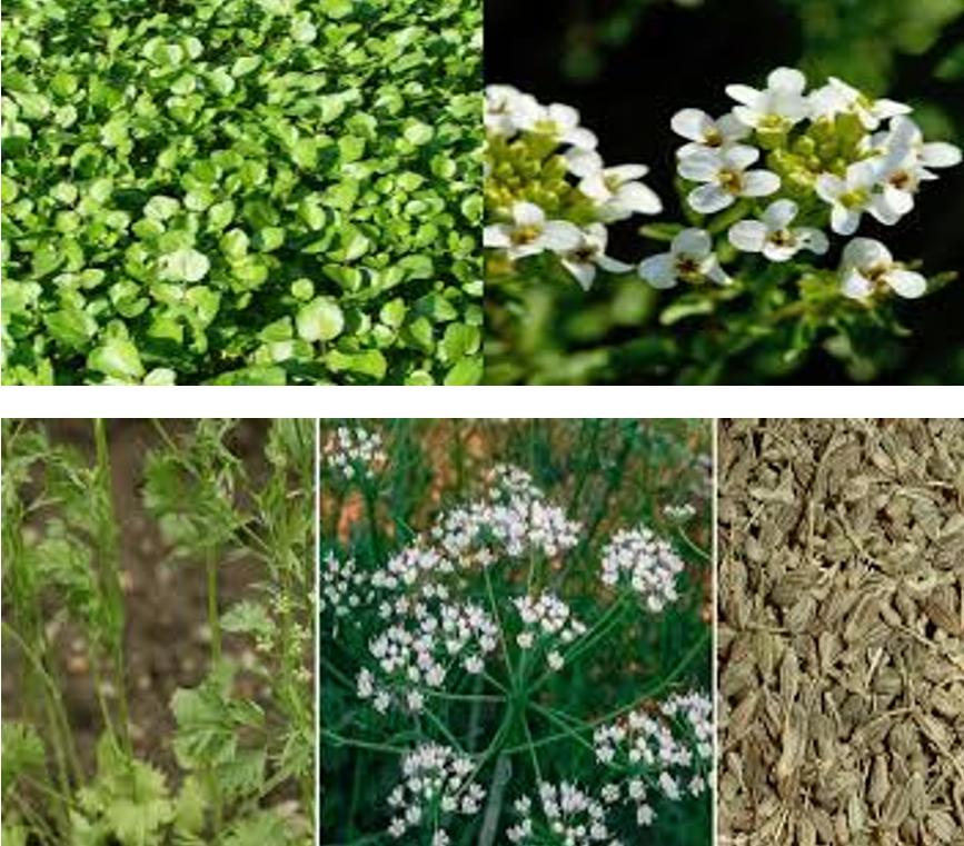 Plante legumicole mai puțin cunoscute; Asmățuiul si cresonul; Legumicultura intensificarea producției și diversificarea speciilor; stiri agricole