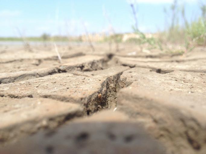 Valoarea despăgubirilor pentru seceta din 2020; cererile se depun la APIA incepand cu 14 august; facem plățile la începutul lunii septembrie; stiri agricole