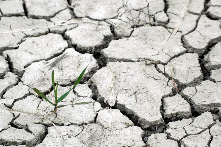 Pe profilul de sol 0-100 cm seceta pedologică puternică şi extremă; in Dobrogea 178,5 litri/mp, în Moldova 243,8 litri/mp, iar în Muntenia 288,5 litri/mp