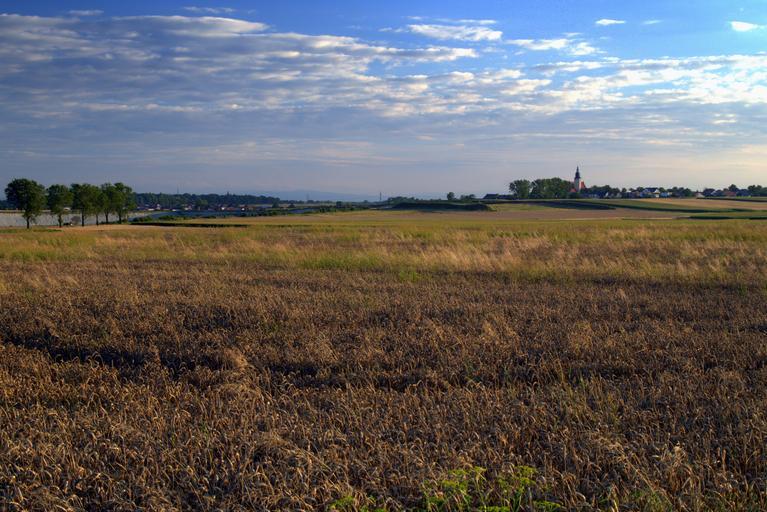 15 septembrie inclusiv – termenul limită de depunere a cererilor de solicitare a ajutorului de stat pentru secetă; stiri agricole