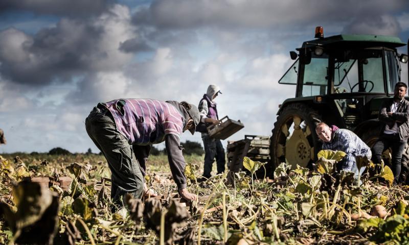"""Zece """"sclavi moderni"""" au fost descoperiți într-o fermă din Bedfordshire; Agricultura """"de mare risc"""" pentru exploatarea și abuzul lucrătorilor; stiri"""