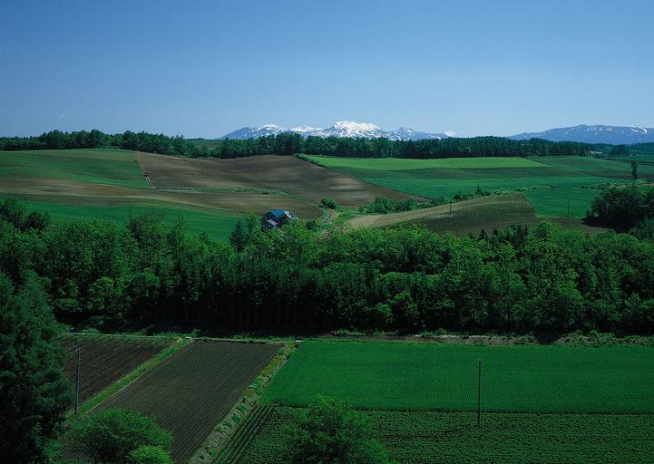 Lege fără precedent inițiată de un mare latifundiar PSD: fermierii actuali vor avea monopol pe terenurile agricole din România; stiri agricole