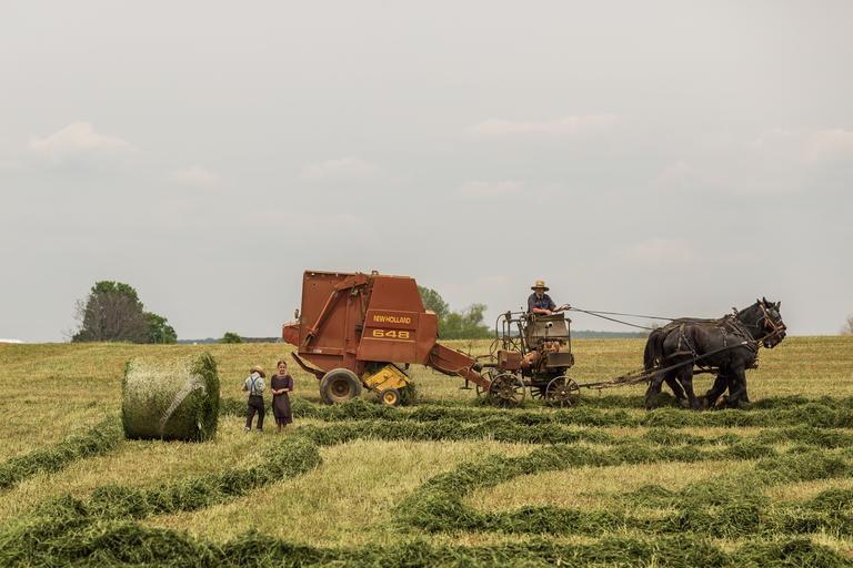 """Extinderea agriculturii ecologice - obiectiv UE; o parte din fondurile alocate pentru Politica Agricolă Comună să meargă spre """"schemele ecologice"""