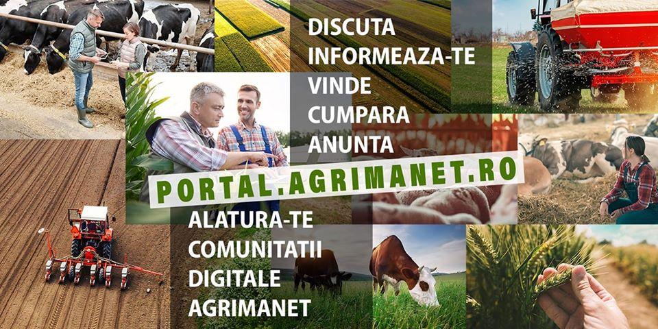 Prețul grâului inregistrează o ușoară creștere; fermierii sunt reticenți în a vinde, deoarece recoltele ar putea fi sub așteptări; stiri agricole