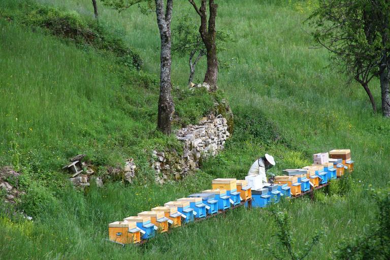 Depuneţi cererile pentru ajutorul de minimis de 25 lei/familia de albine până la data de 15 septembrie. Banii până la data de 31 decembrie 2020. stiri