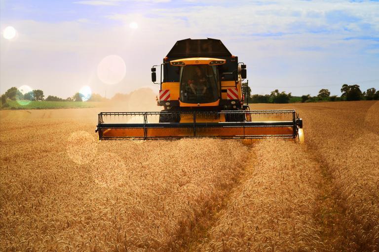 Raport piata cerealelor – Grâu – 22 septembrie; Prețurile pentru Portul Constanța începând de la 228 USD până la valoarea de 235 USD; stiri agricole