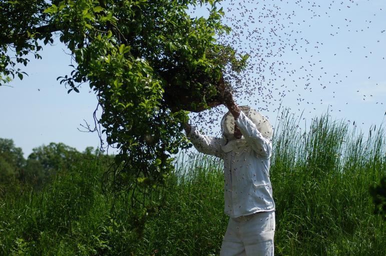 Tiametoxam-ul deși interzis in UE provoacă pagube albinelor la sud de Dunăre; intoxicații în masă ale albinelor din Bulgaria; stiri agricole
