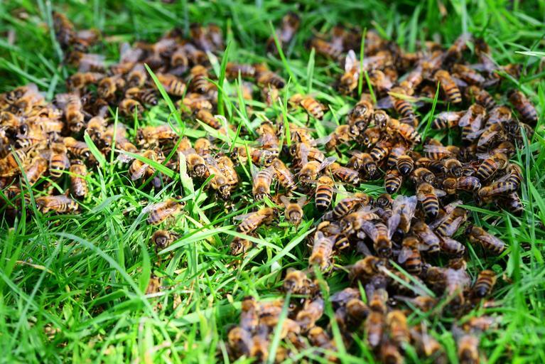 Douăzeci de apicultori au pierdut aproximativ șase sute de stupi; Apicultorii vor primi 200 de euro pe stup afectat; stiri agricole