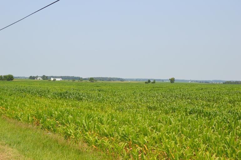 Acordaţi urgent despăgubile pentru fermieri! termen limita 30 iulie; amanarea pentru 12 luni a plăţii ratelor; Alianţa pentru Agricultură şi Cooperare;