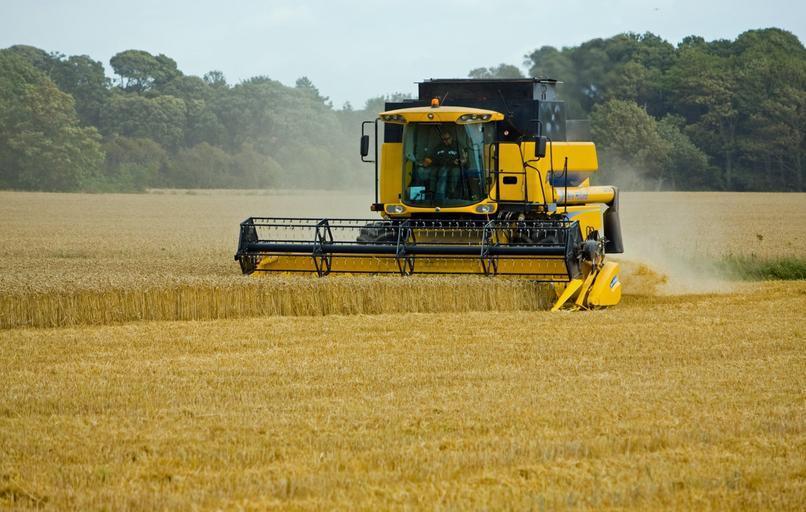 Exporturile de grâu ale UE vor scădea cu 25%; Recolta de grâu României va fi cu 10% sub media din ultimii cinci ani; stiri agricole