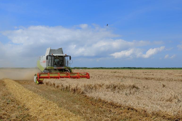 La grâu producția medie la hectar este de 2,9 tone/ha; ce productii medii au fost raportate la culturile de toamna? stiri agricole