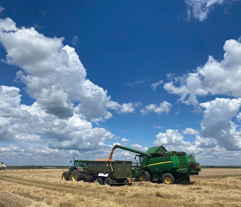 Treieratul este in toi! Grâul este o cultură la care perioada dintre recoltare şi înfiinţarea unei noi culturi este extrem de scurtă; stiri agricole