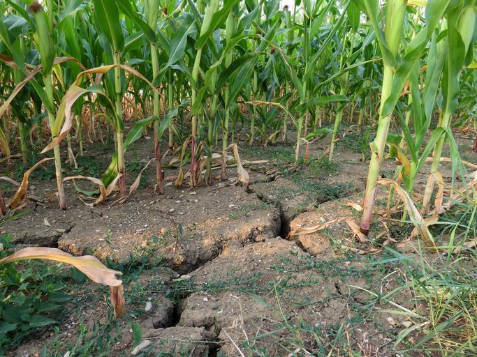 """Primele vorbe înțelepte ale lui Oros: """"Nu mai vreau să fac promisiuni"""". Despăgubirile de secetă vor mai fi plătite? Stiri agricole"""