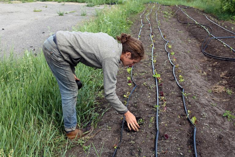 Învăţământul profesional dual ar rezolva problema forţei de muncă calificate în agricultură; Un parteneriat cu fermierii ar fi benefic; stiri agricole