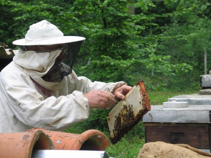 Peste 400 de apicultori olteni au cerut minimisul; Directorul DAJ Olt, Gabriela Andronie, a precizat acestia urmează să primească banii; stiri agricole