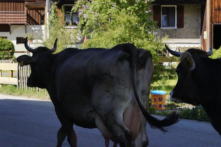 ANT - unii s-au inregistrat cu un număr de animale, le-au vândut, după care 7 ani au stat să fumeze și să ia bani; stiri agricole