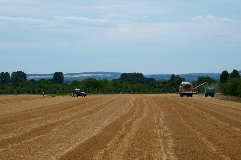 Raport piața cerealelor din România; grau, floarea soarelui, porumb; fermierii români mențin în depozite recolta; stiri agricole