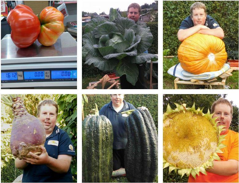 Grădinarul german Patrick Teichmann a stabilit un record mondial pentru cultivarea celor mai mari legume de pe glob; stiri agricole