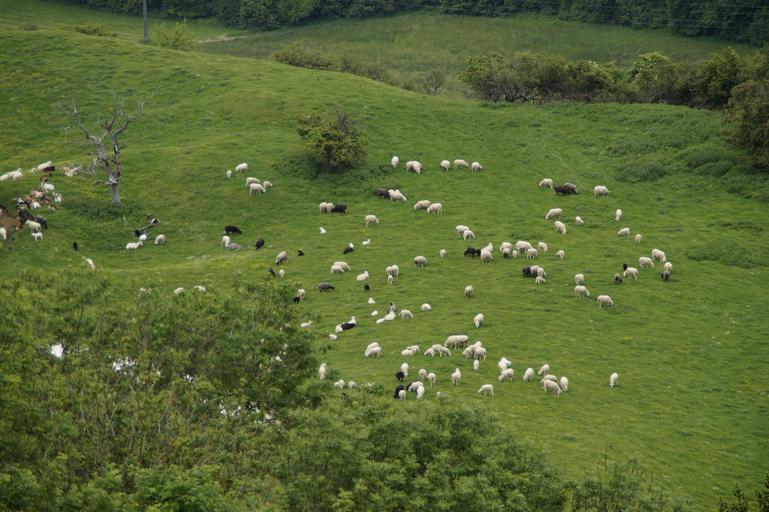 Crescătorii de animale fără pășuni, președinte de asociație, primar si fost primar stăpâni pe pășune; o suprafață de pășune (321,79 ha); stiri agricole