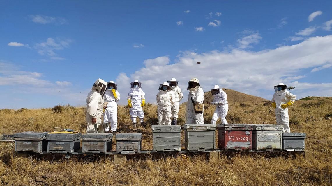 Apicultorii sunt afectați de importurile ieftine de miere; Diferența de prețuri explicată doar prin adăugarea majoră a siropului de zahăr; stiri agricole