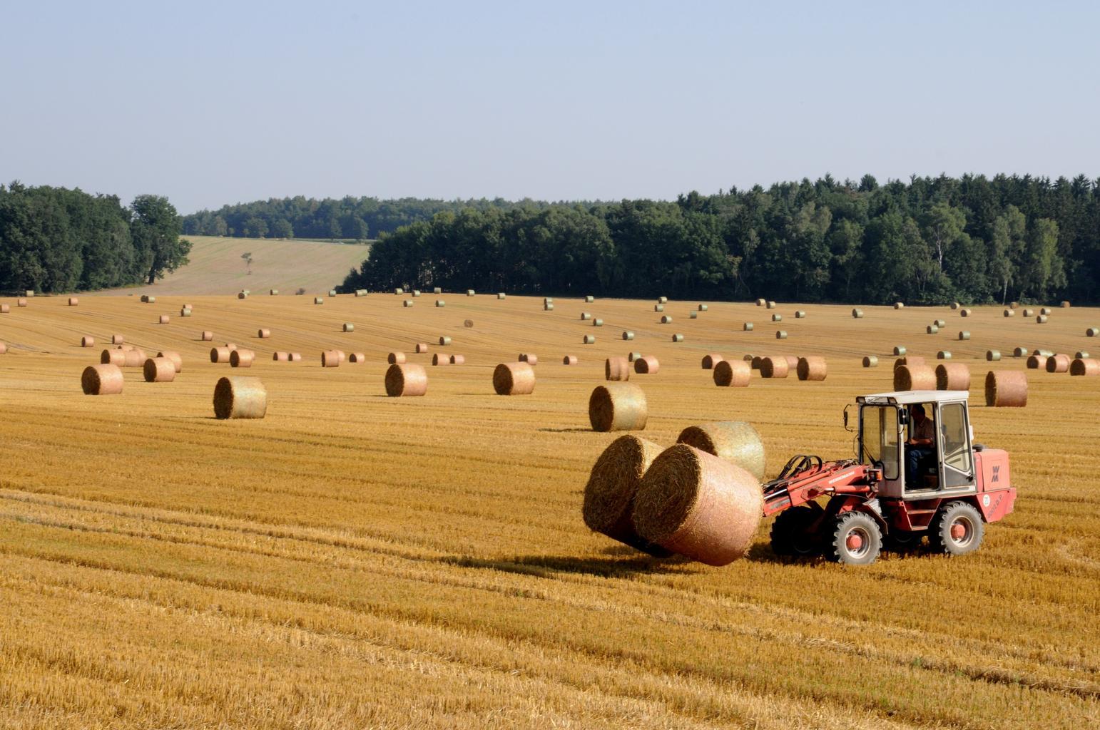 Relația dintre fermieri si traderii de cereale; Agribusiness în România; fermieri ce nu pot onora contracte către cumpărători; stiri agricole