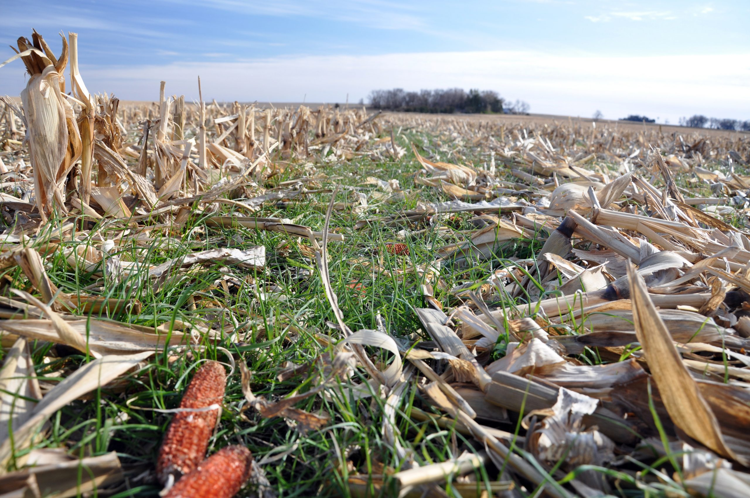 Păstrați solul acoperit și reduceți la minimum scenariile în care solul este gol și expus la precipitații și vânt