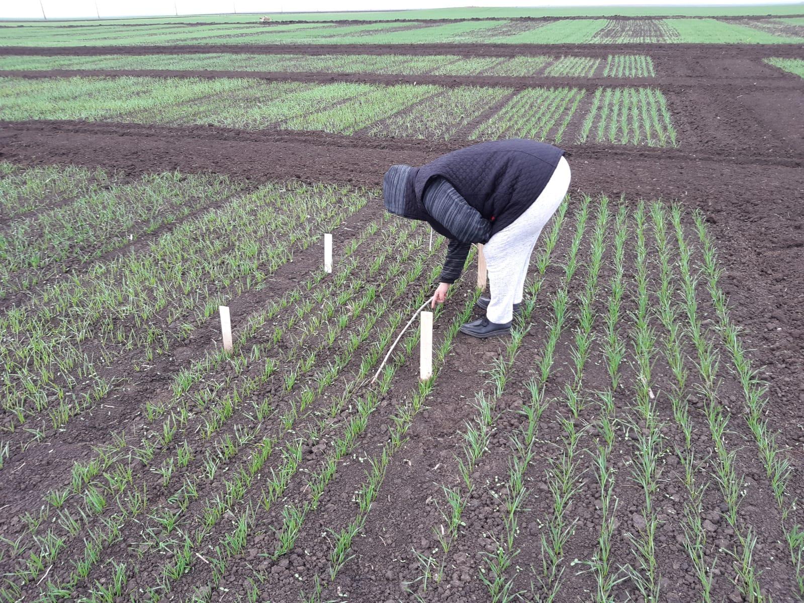 """""""Începând cu data de 25.11.2020 vom demara plata"""" pentru fermierii afectați de pandemie; s-au depus cereri într-un număr de 122.986; stiri agricole"""