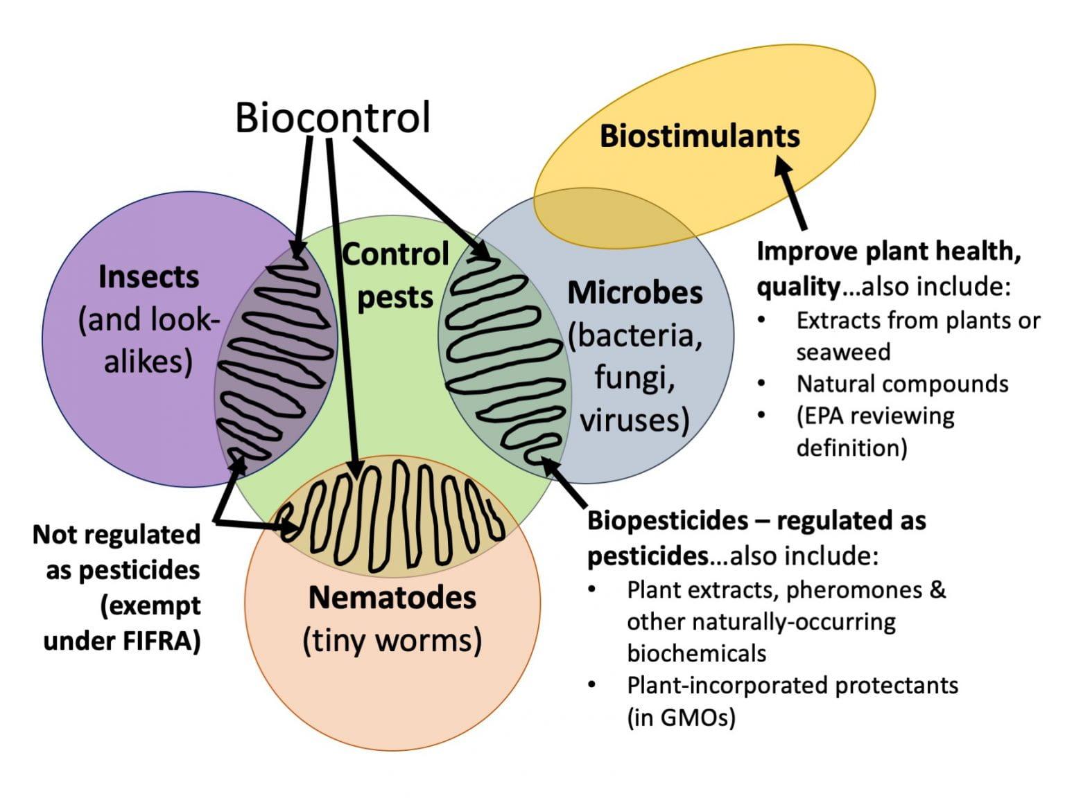 Despre biocontrol, biopesticide si biostimulatori...ce este un pesticid? imbunatatirea sanatarii plantelor; unde se incadreaza biocontrolul? stiri agricole