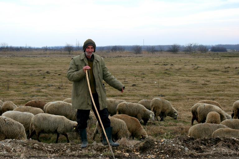 Partidul are grijă de fermierul român! Una dintre aceste priorităţi este sprijinirea producătorilor români să îşi comercializeze produsele; stiri agricole