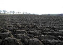 Direcțiile agricole incep o acțiune de inventariere a culturilor agricole de toamnă, suprafețele recoltate, producțiile obținute; stiri agricole