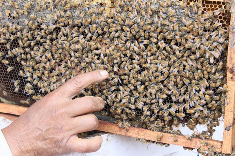 acreditarea organizaţiilor/asociaţiilor crescătorilor de albine care înfiinţează şi menţin evidenţe zootehnice și genealogice; stiri agricole