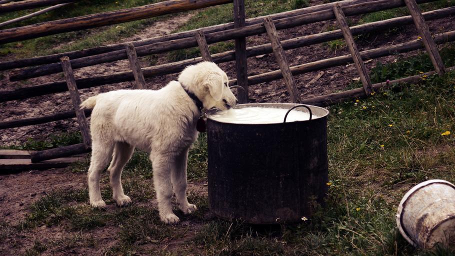 Misiune de audit a Comisiei Europene – Evaluarea controalelor oficiale privind siguranța laptelui și a produselor din lapte; stiri agricole