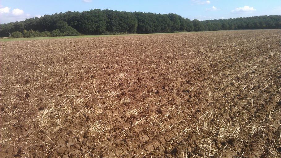 Perspectivele cererii şi ofertei de cereale, FAO a revizuit în scădere cu 13 milioane de to producţia mondială de cereale din 2020; stiri agricole