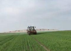Inca un fermier executat de catre un trader de cereale; am avut un contract de vanzare cumparare pentru 300 tone porumb; stiri agricole