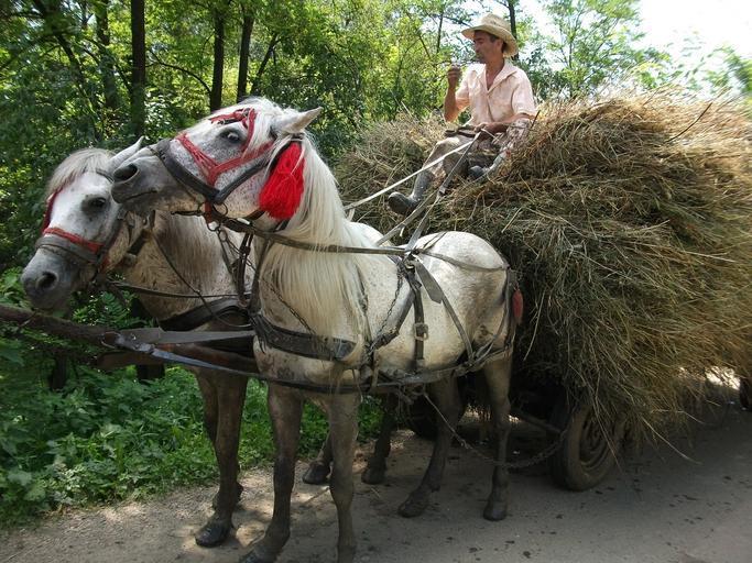 In campanie electorala cu Adrian Oros; Să consolidăm foarte mult ferma de familie încât ea să devină o fermă comercială; stiri agricole