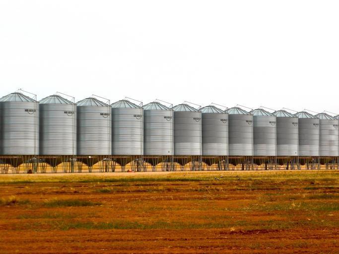 Chinezii, elveţienii şi americanii - cei mai mari traderi şi exportatori de cereale din România; peste 10 milioane de tone de cereale româneşti exportate