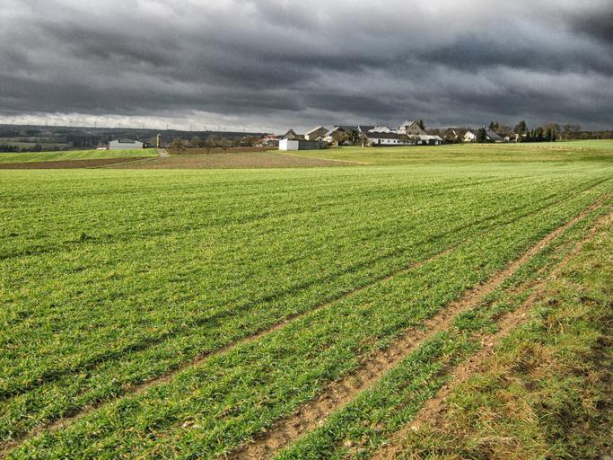 Agricultura est-germană la 30 de ani de la reunificare; o creștere a prețului terenurilor agricole disproporționată față de randamentele din agricultură